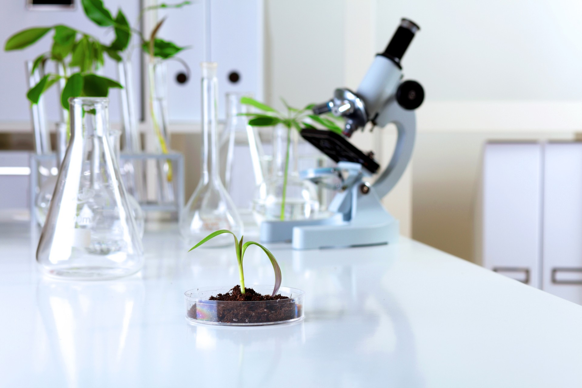 Kozzi-green-plants-in-biology-laborotary-2387-X-1591